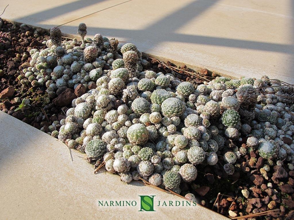 Ambiance minérale et plantes grasses dans une villa dans les alentours d'Eze sur Mer