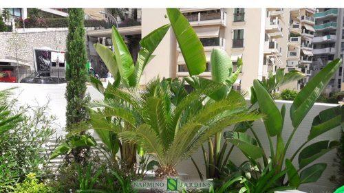 Travaux de jardinerie : entretien de jardinières à Monaco