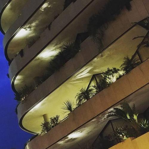 Jardinières et plantes de nuit à Monaco
