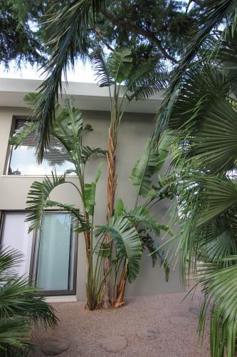 Des plantes partouts !