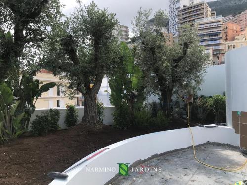 Des oliviers montés là-haut avec de hautes grues