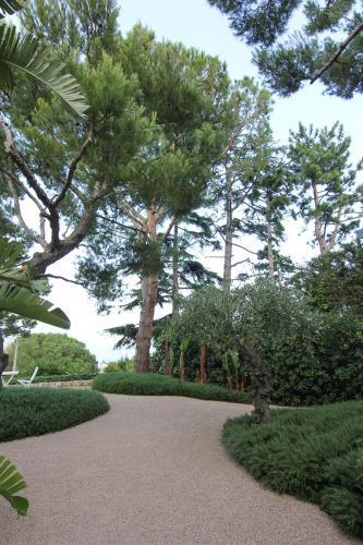 Des pins élagués et entretenus par Narmino Jardins