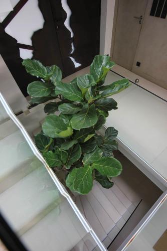 Une plante d'intérieur dans les escaliers