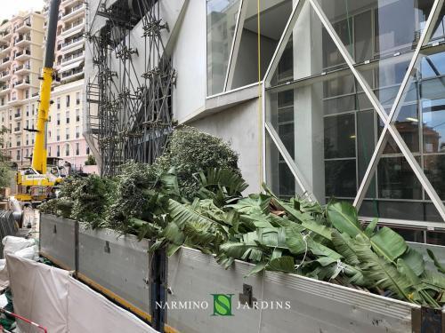 Plantes destinées à être plantées
