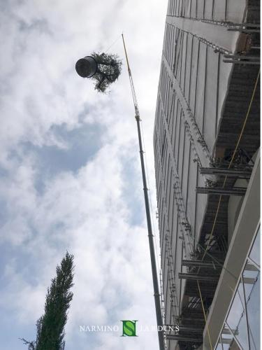 Grutage de plantes vers des jardinières dans un chantier