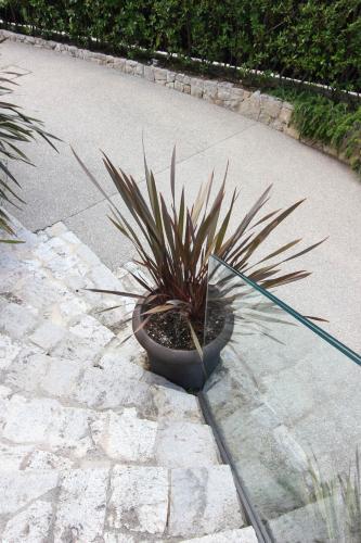 Des plantes en pot