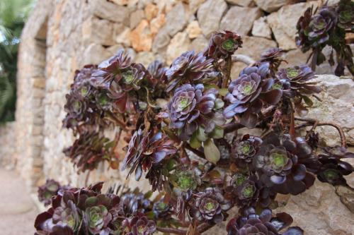 De belles plantes grasses