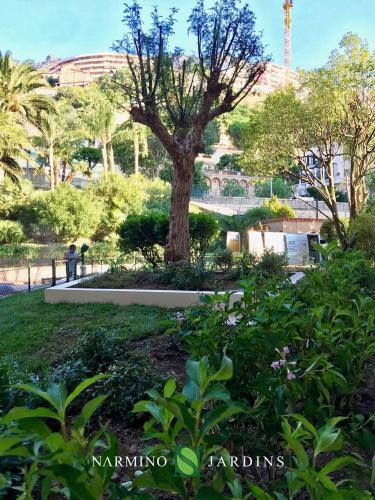Displacement of an olive tree in Monaco
