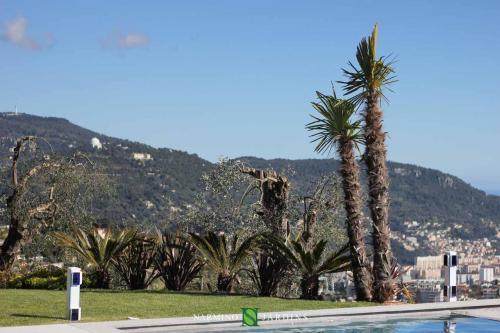 Palmier devant les montages de Nice