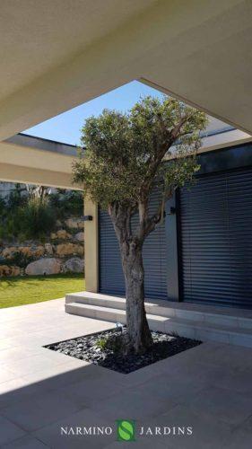 Chaque olivier a trouvé son emplacement dans cette villa d'architecte !