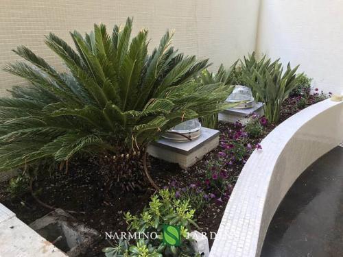 Plantes vertes diverses au Stella