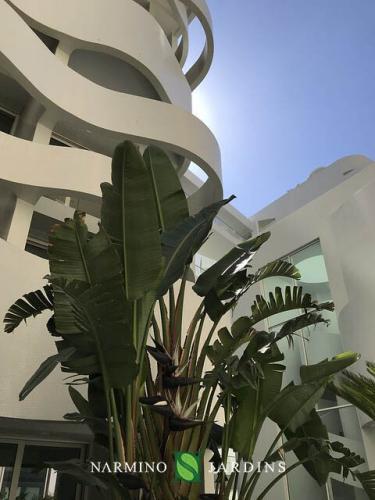 Un palmier devant l'immeuble le Stella à Monaco
